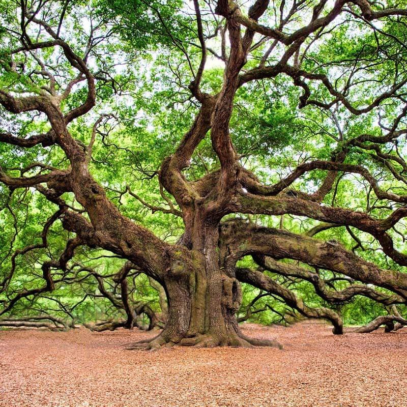 Der Baum als Sinnbild der vielfältigen Behandlungsmöglichkeiten bei psychischen Erkrankungen